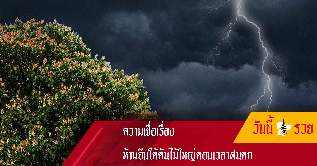 ห้ามยืน ใต้ต้นไม้ใหญ่ตอนเวลาฝนตกเพราะฟ้าจะผ่าใส่